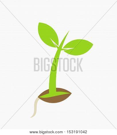 Young plant seedling germination flat design illustration