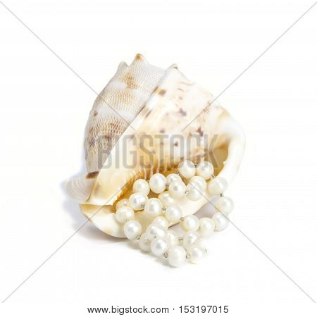 Beautiful shell with pearl beads on white background