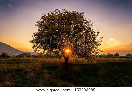 Beautiful Sunset through the single tree branches