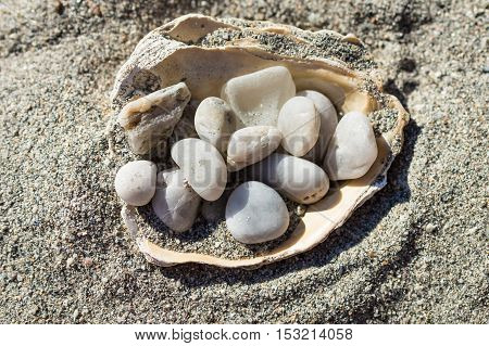 White pebbles in the shell on the sand