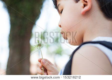 Boy holding dandelion flower with seeds on park