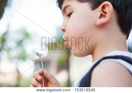 Boy plays with dandelion seeds on park