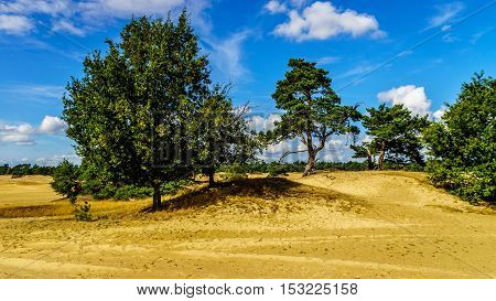 The mini desert of Beekhuizerzand in the Veluwe area of the Netherlands. Beekhuizerzand is the largest sand drift area in Europe