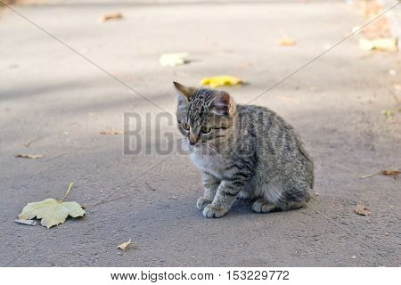 a small kitten in the street homeless