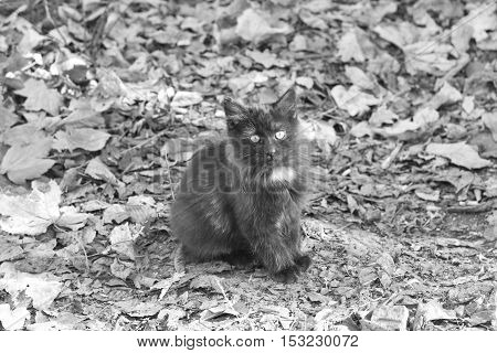 a small kitten in the street homeless. black and white photo