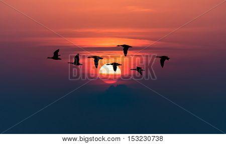 Flock of birds flying over dramatic sky background