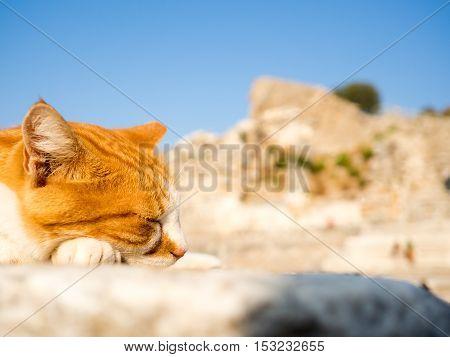 Stray cat in Ephesus on top of old ruins.