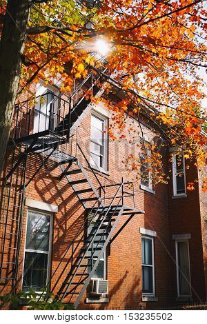 tree with autumn leaves and brick house. beautiful fall in Boston