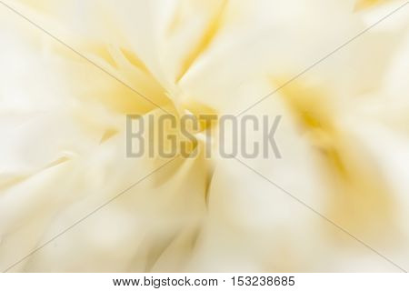 Smooth white peony flowers on a white background