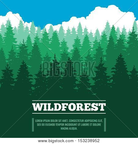 Wild landscape with fir trees coniferous forest vector illustration. Wood nature with pine and green tree