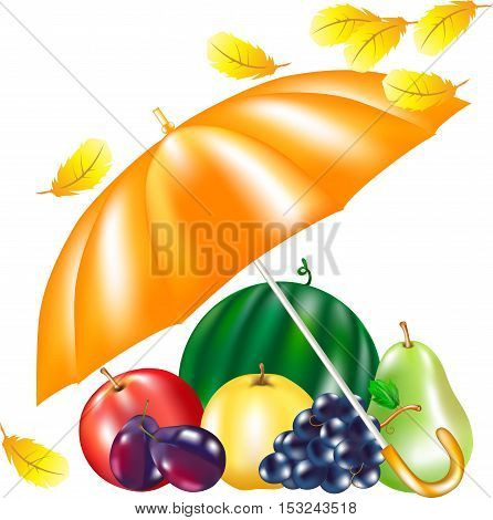lot of fruit under an umbrella, vector apples, grapes, a pear, sweet summer fruit, an autumn still life with products, healthy food, autumn leaves