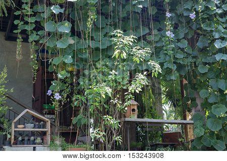Home through the green garden, stock photo
