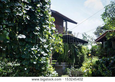 Home through the green garden stock photo