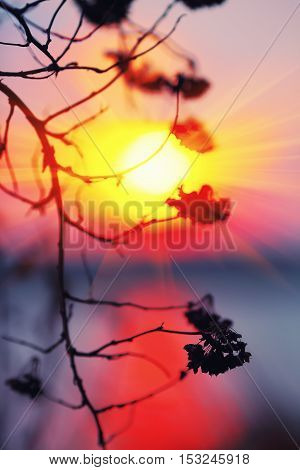 Abstract Plant Silhouette at sunset. Shallow depth of field