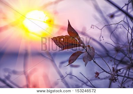 Dried foliage on a background sunset. Shallow depth of field