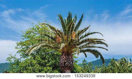 Palme - Perfect palm tree against a beautiful blue sky