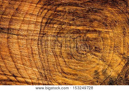 A closeup shot of sawn tree trunk