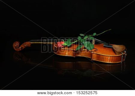 Musical instruments / Violin on a black background