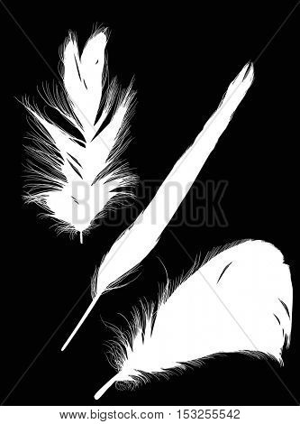 illustration with white feathers on black background