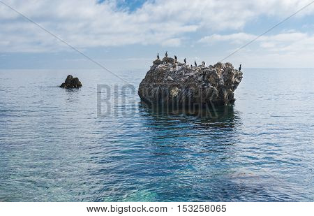 Black Sea wild water-scape with cormorants resting on a rock .