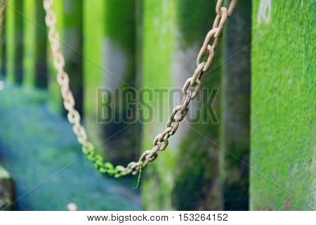 Chain links covered in green water weed with selective focus
