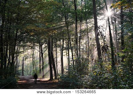 person taking a walk through mystic forest in fall, with sun flare and sunbeams cutting through the fog