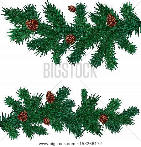 some green spruce branches with cones without background