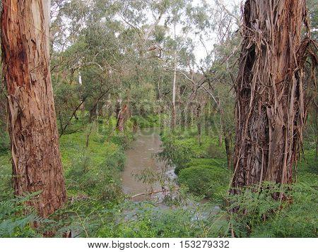 Rural creek through bush and wetland in the late afternoon sun Victoria Australia 2016