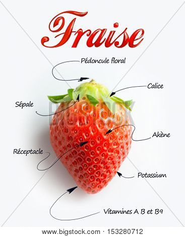 Macro shot of a strawberry with detail parts explanation in French The texts say : strawberry, achene, calyx, flesh, epicalix, Vitamine C, steme,