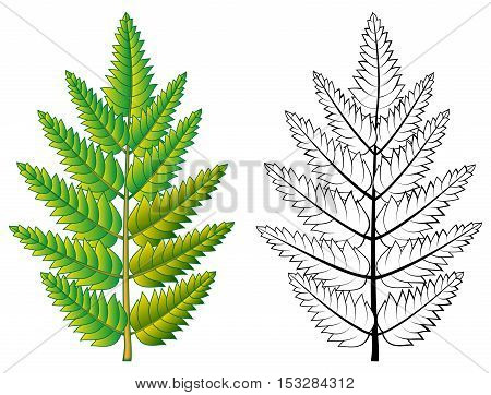 Colorful and black and white pattern rowan leaf, vector cartoon image.