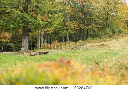 A large meadow with trees on both sides. Bench made of logs near a campfire. Autumn landscape.