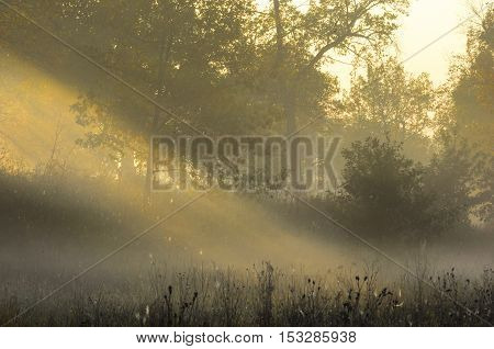 Fall Forest, Fog, Morning, Evening, Bright Yellow Sun. Rare Beautiful State Prirody.the Period Of Ti