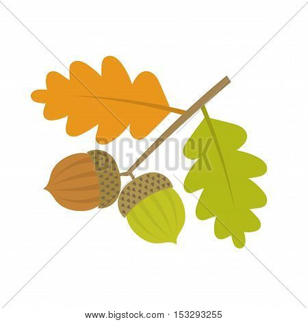 Oak branch with acorns and leaves. Vector illustration
