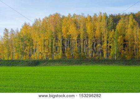 Autumn, Winter Wheat, Winter Grains, Red Yellow Beautiful Trees, Bright Green Winter Crops
