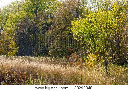 Autumn In The Forest, The Forest Deciduous Tree, Fall Colors Painted Wood