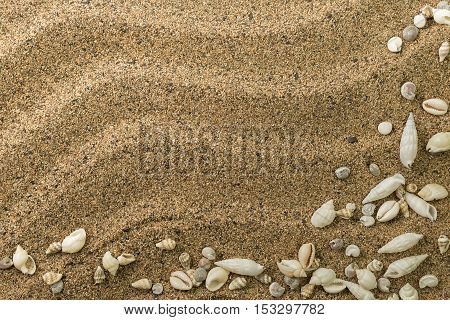 card with sand and waves fringed with sea shells