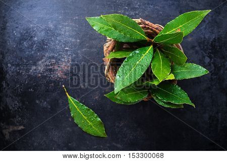 Fresh organic bay leaves in a basket on a grunge rusty black table. Selective focus, copy space background, top view overhead flat lay