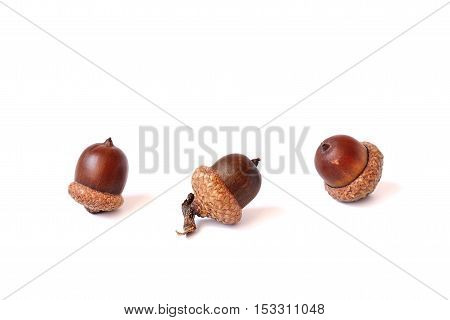 Group of acorns on a white background