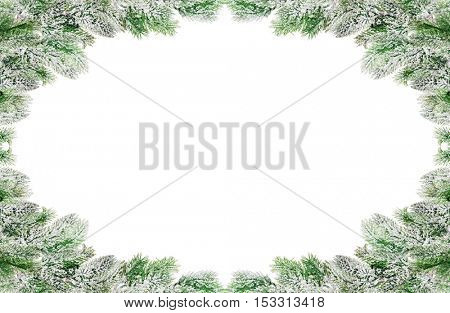 frame from pine tree branches in snow isolated on white background