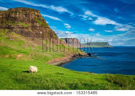 Sheep On The Edge Of A Cliff, Isle Of Skye, Scotland