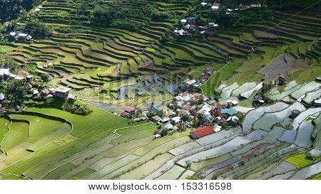 Batad Rice Terraces, UNESCO Heritage, Central Luzon Philipines, Southeast Asia