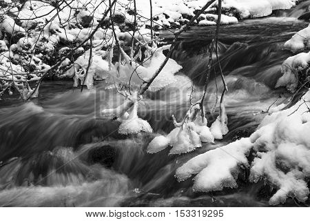 Fast winter mountain river the shore covered with snow. Frost and icicles on the branches of tree black and white photo.