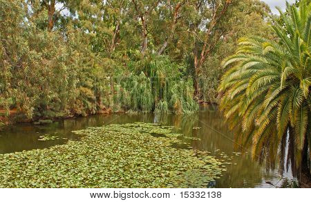 Tree Lined Lagoon In An Australian Town