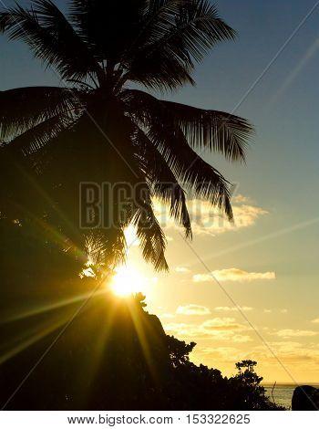 Landscape Palms Sea