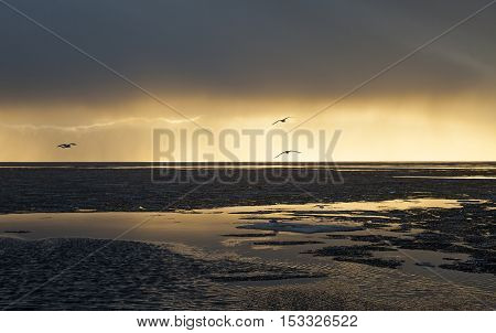 Water and ice landscape in gold colors night