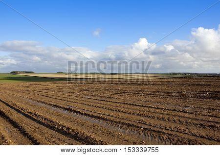 Harvested Potato Field