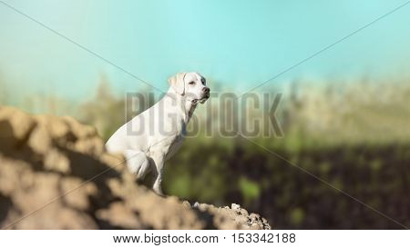 young labrador retriever dog puppy on a hill - abstract stormy background