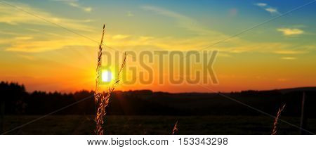 Plant of field at sunset. Nature vintage background.