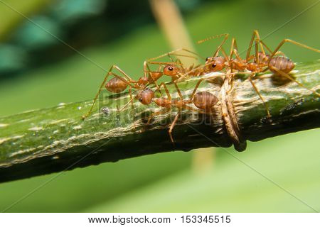 The Group Of Working Ants