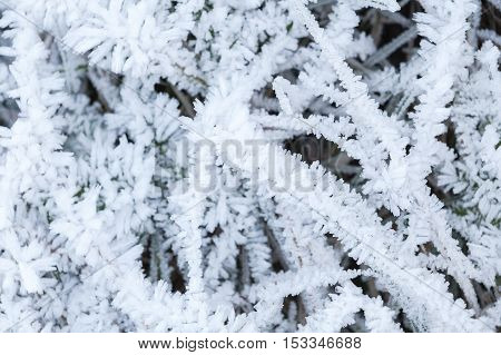 Crystals Of  Frost Cover Green Grass